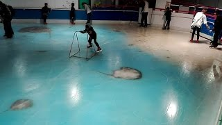 Anger as Japanese skating rink freezes thousands of fish into ice as gimmick