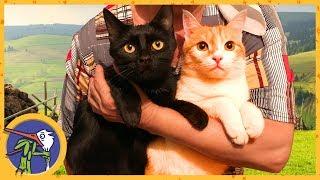Котик Рыжик едет в гости к кошке Китти. Друзья навсегда