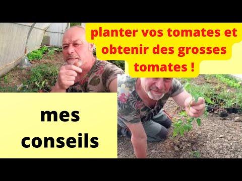 que faire en mai au jardin : planter les derniers pieds de tomates et  visite de la serre