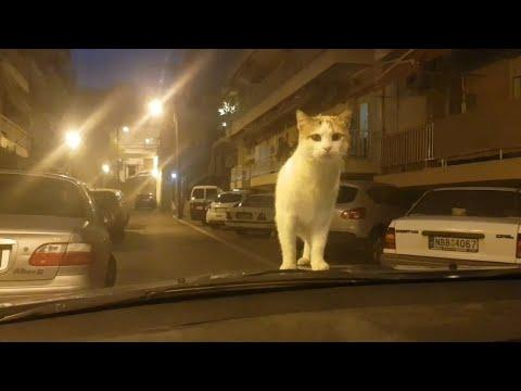 Криминал на улицах Салоник