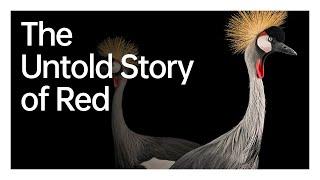 Endangered Red   OPPO x Nation…
