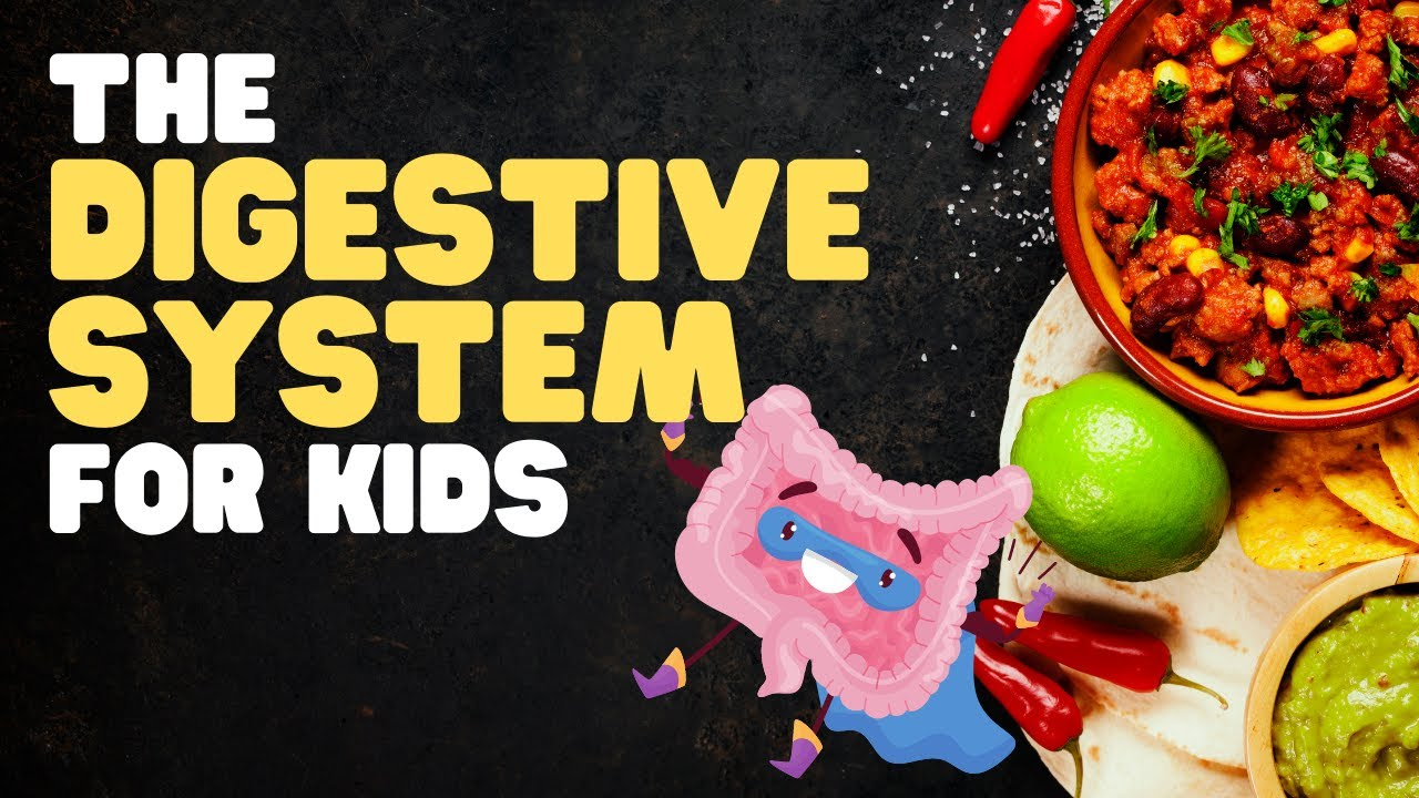 hight resolution of The Digestive System for Kids   A fun engaging overview of what happens  when we eat! - YouTube