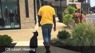 Pittsburgh Steelers' Clifton Geathers: Turnover And Testimonial! Celebrity Dog Trainers