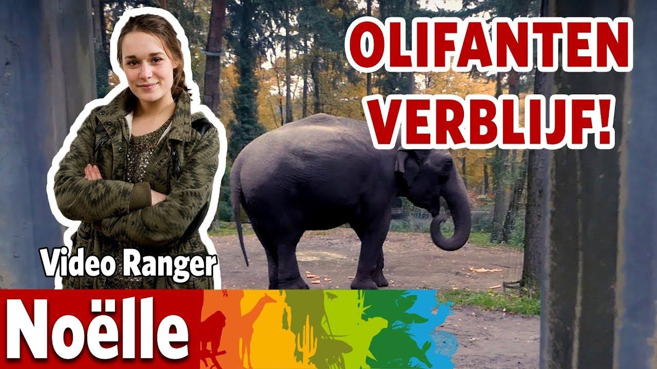 Ik maak het bejaardentehuis van de olifanten klaar!