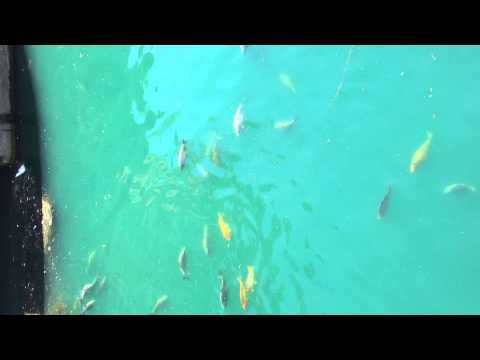 Princes Quay�shopping centre hull fish