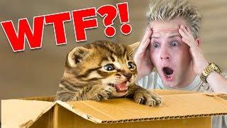 FAN SCHICKT MIR HAUSTIER PER POST 😱 - WTF?! II RayFox