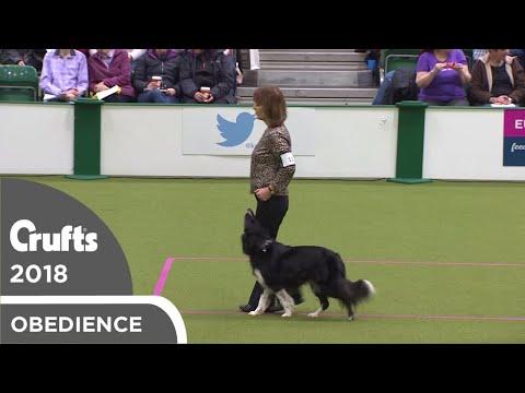 Obedience - Bitch Championship - Part 12 | Crufts 2018