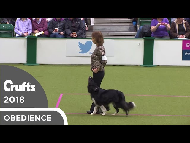 Obedience - Bitch Championship - Part 12 | Crufts 2018