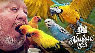 PAPAGEI oder KAKADU, das ist hier die Frage! | BUNTE VÖGEL in NORBERTS WELT | Zoo Zajac