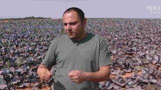 סגירת השוק הסיטונאי: הירקות ישארו יקרים, החקלאים יפסידו