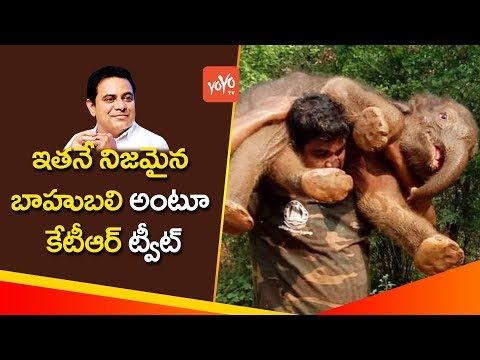 Forest Officers Team Saved Baby Elephant  At Mettupalayam    Tamil Nadu   YOYO TV Channel