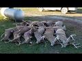 Deer Hunting Action!!!