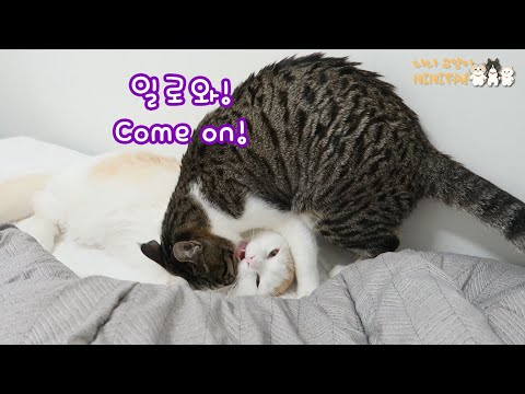 How a Mom Cat Handles a Baby Cat