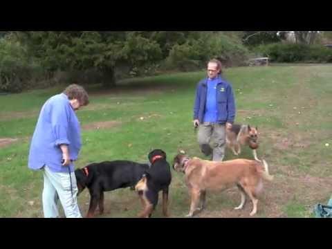 Aggressive Dog Rehab Testimonial Jangosi Solid K9