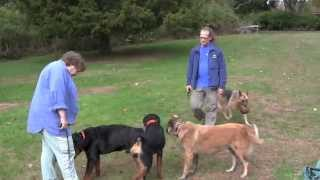 Aggressive Dog Rehab Testimonial-jangosi, Solid K9 Training
