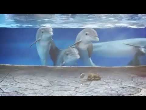 Jim Show - These Dolphins Are Fascinated By Squirrels!!