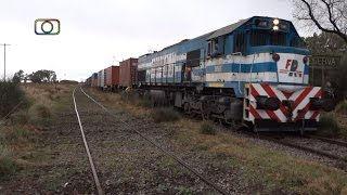 Hermoso tren de Ferrosur pasando por Reserva