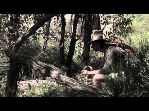 Darling Range Western Australia RARE MYSTERY CREATURE SIGHTING