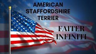 """Стаффордширский терьер """"Тира"""" Faiter Infiniti лучшая порода собак в мире, стаффорд."""