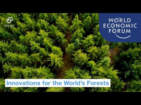 UpLink: Innovations for the World's Forests | World Economic Forum