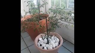 베란다 텃밭 식물인테리어베란다정원