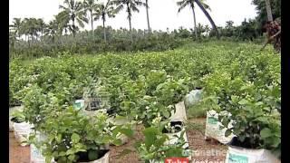 Money Time 6th Aug 2015|Sucess story of Jasmine Farming