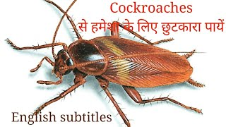 How to get rid of cockroaches permanently - Effective ways to get rid of cockroaches | Anupama Jha