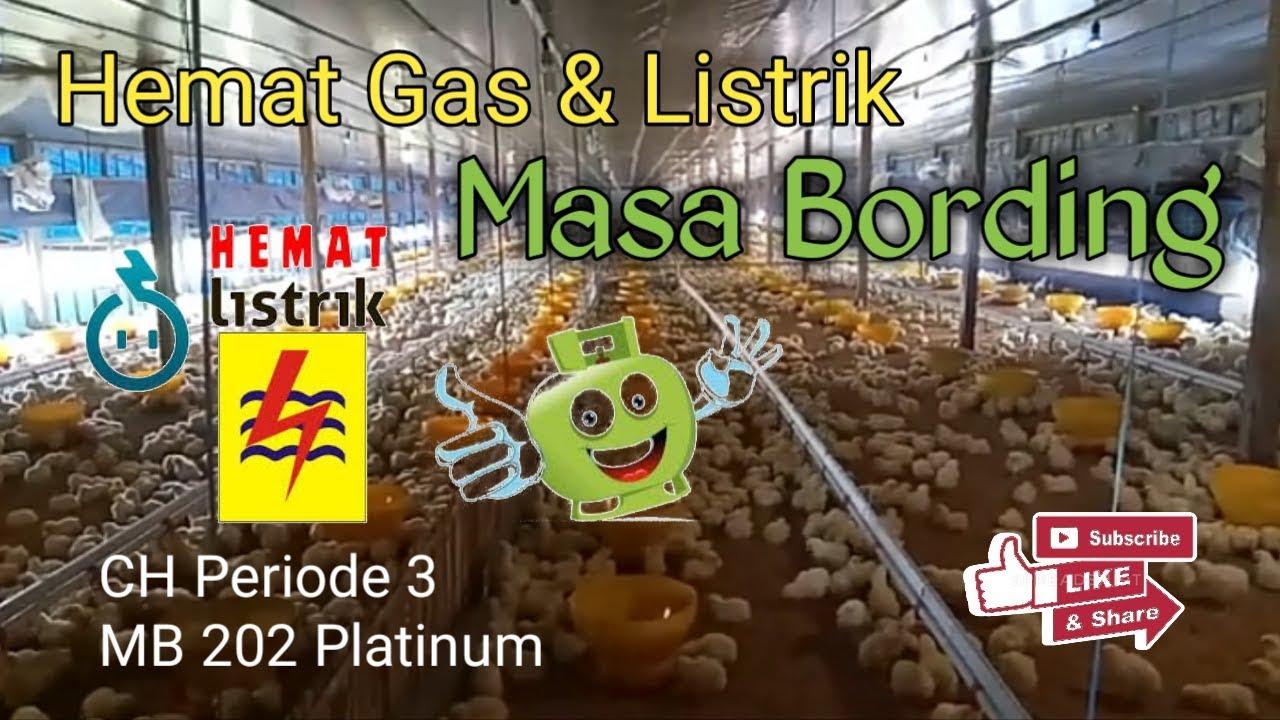 #005 Cara Bording / Broding Hemat Gas & Listrik - Kandang ...