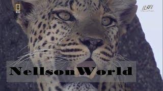 """Мир животных Африки  Дикие Кошки  """"Глаз Леопарда"""""""