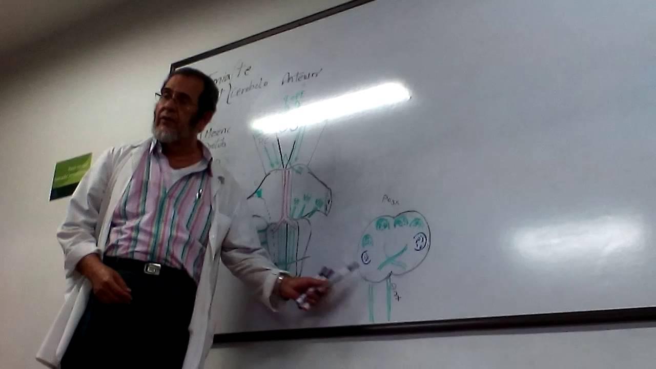 Anatomía interna de tallo cerebral - Manuel Molina - YouTube