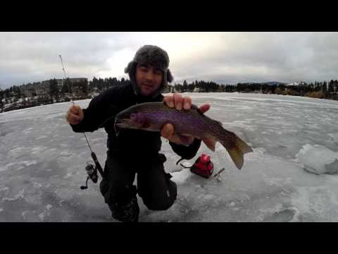 Shannon Lake Kelowna: Ice Fishing Rainbow Trout