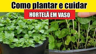 Cultive Hortelã Em Garrafa Pet