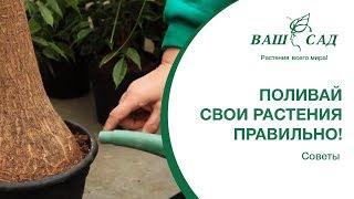 Как правильно поливать комнатные растения? Ваш сад