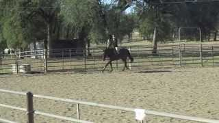 Horse For Sale - 16.1 Hh Thoroughbred Gelding, Redding, Ca, Video Jumping And Under Saddle