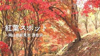 岡山県紅葉スポットー新見市 満奇洞ー