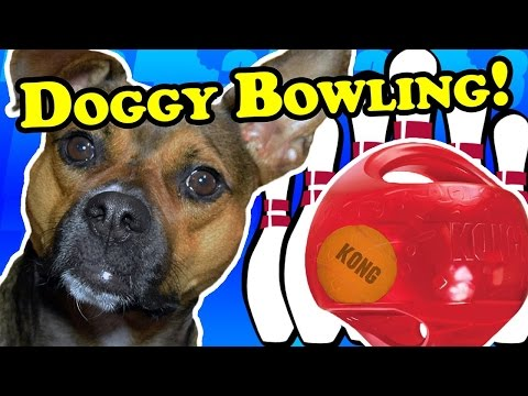 Doggy bowling with the Kong Jumbler! - Dog Toy Reviews | KONG Jumbler Ball Dog Toy