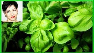 Basilikum selbst anbauen aussäen pflegen ernten Aussaat - Ganz simpel in 3 Wochen