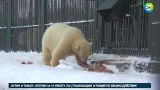 В гостях у спасенных диких животных