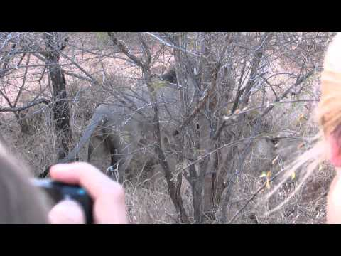 Hannah P2P South Africa Lions