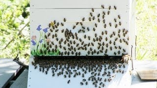 Beekeeping Lessons - When to add a Super