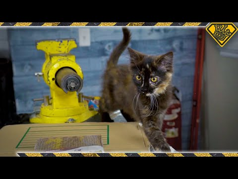 Do These Cat Hacks Actually Work?
