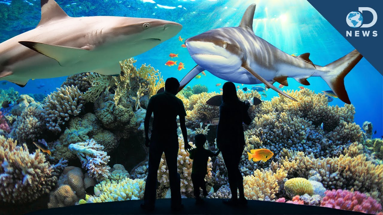 Building The Perfect Shark Exhibit
