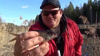 Рыбалка на попловок на малой реке весной клюет красноперка плотва и разная бель душевная рыбалка
