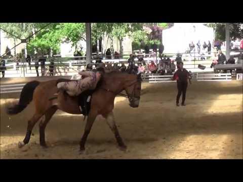 centre equestre 77 le pin