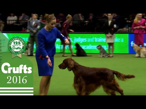 International Junior Handling Competition - Final | Crufts 2016