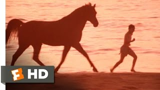 The Black Stallion (7/11) Movie CLIP - Boy and Horse (1979) HD