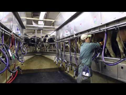 REAL Ontario Farm Insurance - Promo Video