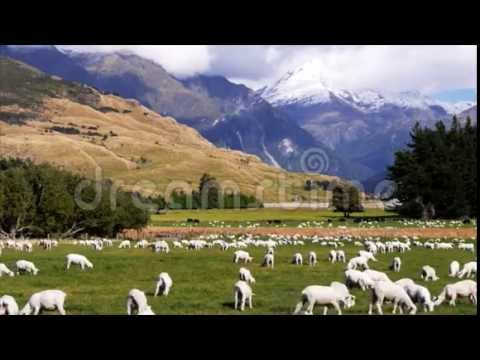 Stock Footage of New zealand sheep station