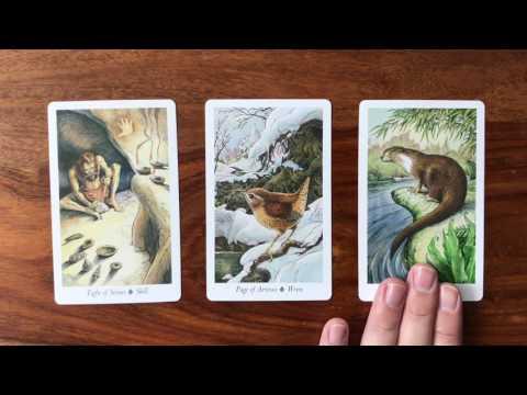 Tarot Scott Reading June Gregory for Daily 2017 15