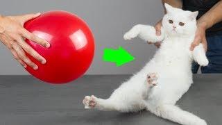 8 Nowych Niesamowitych Pomysłów Dla Właścicieli Kotów
